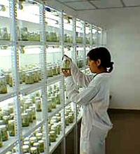 890_biotecnologia-2.jpg