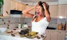 Consejos y remedios caseros para eliminar las ratas bioero - Como eliminar ratas en casa ...