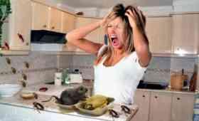 eliminar ratas del hogar