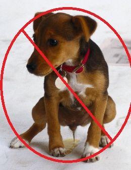 repelentes naturales para evitar que los perros orinen
