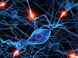 células madre para tratar patologías neurodegenerativas