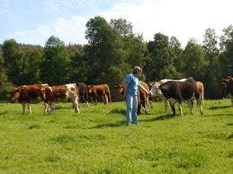cursos de bienestar animal